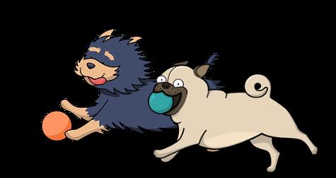 2 hunde løber og få fat på sit legetøj.